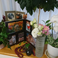ハロの祭壇